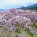 4月16日【2020】子供たちの想いをのせて…高度300㌳から御杖村丸山公園の春を撮る