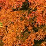 11月12日【2020】令和2年の秋 色とりどりのみつえ『奈良』紅葉巡り