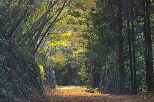 三峰山紅葉