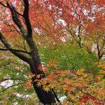 11月13日【2020】令和2年の秋 色鮮やかみつえ『奈良』丸山公園で紅葉狩り