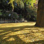 11月17日【2020】令和2年 色鮮やか奈良みつえの秋・紅葉総集編『朝光の中で』