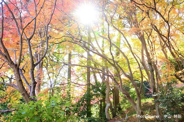 九品寺の秋