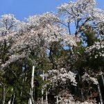 4月1日【2021】春の陽気に花々は…