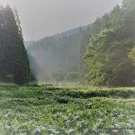 7月10日【2021】岡田の谷の半夏生。。。見どころポイントの紹介