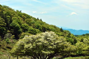 奈良県御杖村三峰山の春