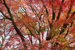 奈良県御杖村 丸山公園の紅葉