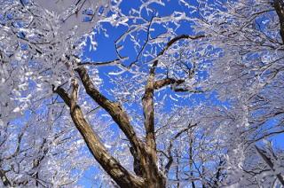 奈良県御杖村 三峰山の霧氷